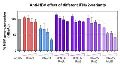 Effect of IFNα2-variants on HBV gene expression in vitro. The levels of extracellular HBsAg of HBV-infected primary human hepatocytes treated with increasing concentrations of IFNα2 mutants were examined by ELISA and normalized to the untreated control (no IFN, grey bar).