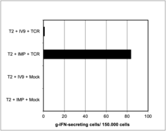 Peripheral Blood mononuclear cells were electroporated with mRNA encoding a Influenza matrix protein (IMP) specific T-cell receptor. HLA-A2-positive T2-cells were incubated for one hour with the IMP-Peptide GILGFVFTL (IMP, FLU-M1:58-66) or with the HIV-RT-peptide ILKEPVHGV (IV9). Thereafter, 50 000 T2-cells were added to 150 00 PBMC and incubated over night in a g-IFN-ELISPOT-assay. Given are the numbers of g-IFN-secreting T-cells representing the peptide specific CTL. MOCK: PBMC, electroporated without TCR genes.