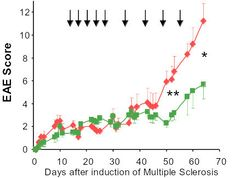 Improvement of clinical EAE score in treated animals